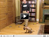 leash walking videos