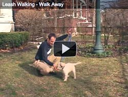 Train your dog to walk away if the leash is tight