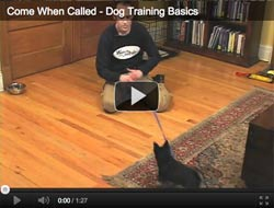dog training come when called basics
